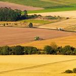 Modern harvest time thumbnail