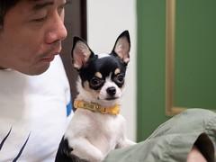 小嘟嘟 07 (enno7898) Tags: olympus pet puppy f28 1240mm mzuiko g9 lumixg9 lumix panasonic
