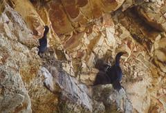 Cliff dwellers (Jeff Goddard 32) Tags: cavelanding avilabeach sanluisobispocounty lowtide