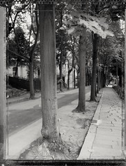 Old City stories#  Expired Polaroid 55, Toyo view camera (Papayaspoint) Tags: landscape citylandscape trees polaroid negativefilm largeformat viewcamera toyo 4x5 peelapart