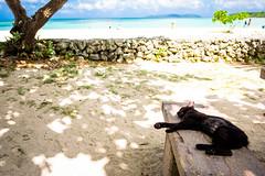 thrivers on islands #133 (Taketomi Island, Okinawa) (Marser) Tags: xt10 fujifilm raw lightroom japan okinawa taketomi island cat sea seashore sleeping 沖縄 竹富島 猫 貓