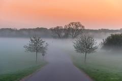 Nebel in den Morgenstunden (Uwe Weigel) Tags: sonnenaufgang landschaft fog nebel gras baum landscape landscapephotography sunrise natur nature naturphotography colorsofday earth pic view naturperfektion
