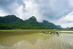 Bắc Sơn T7-2018 (Le Quang Photography) Tags: landscape nature ricefield terrace vietnam abstract agriculture asia asian background beautiful blue color colorful culture curve earth ecology environment farm farmer farming field green ground grows harvest horticulture imposing indochina land mountain myanmar natural pattern plant plough plow rake rice river rough saigon sapa soil summer transplant travel valley water