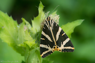 Drôle de papillon.