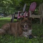 Sylin' In The Backyard-(Low Key) thumbnail