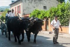 Autrefois le Couserans (Ariège) (PierreG_09) Tags: ariège pyrénées pirineos couserans fête manifestation tradition saintgirons autrefoislecouserans bœuf salers