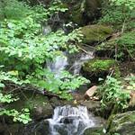 Upper Pine Bottom State Park (7) thumbnail