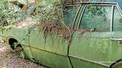 Old Car City 110 (augphoto) Tags: augphotoimagery abandoned auto automobile car decay green old weathered white georgia unitedstates