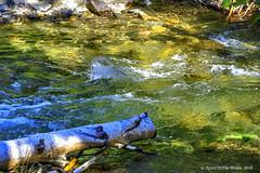 Sullivan Creek ? (jimgspokane) Tags: sullivancreek creeks camping washingtonstate forests mountains