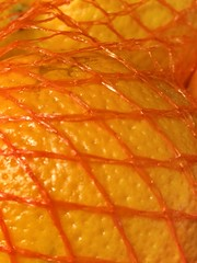 "Macro Mondays - ""Mesh"" (hp349) Tags: mm hmm food netting mesh yummy abstract fruit orange monday mondays macro 7dwf ""mesh"" ""macromondays"""
