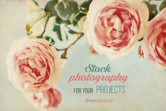 Summer Nature Background (Kseniya Polonskaya) Tags: card decorative decor design floral flower frame gift greeting grunge heritage memory note old paper paperboard photo photoalbum pink beige green postcard retro romantic rose scrap scrapbook scrapbooking style template texture textured victorian vintage sunshine autumn background backdrop nature natural roses brush