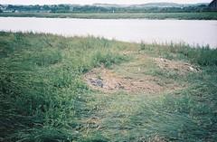 Tide line, Lamplighter's Marsh (knautia) Tags: lamplightersmarsh riveravon avonmouth bristol england uk august 2018 ishootfilm olympus xa2 olympusxa2 nxa2roll54 heatwave river avon m5 motorway motorwaybridge naturereserve tideline 160iso kodak portra