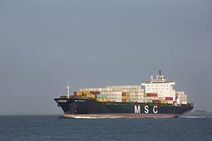 MSC SANTHYA (angelo vlassenrood) Tags: ship vessel nederland netherlands photo shoot shot photoshot picture westerschelde boot schip canon angelo walsoorden cargo container mscsanthya