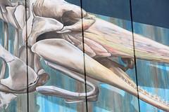 3D mural Den Helder by Leon Keer (leon keer) Tags: leonkeer streetart streetpainting mural chrisdepotvis christhespermwhale spermwhale dieselgenerator denhelder fortwestoever urbanart publicart muralartist painting 3d 3dart 3dmural anamorphic wall wallpainting vd vroomendreesman suitcase travel lifebuoy lifesaver
