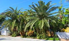 Key West (Florida) Trip 2017 7996Ri (edgarandron - Busy!) Tags: florida keys floridakeys keywest house houses