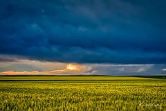 L59A4021_edit.jpg (kendra kpk) Tags: wheat dakotawindsphotocom dakotawindsphotography windrower us grain southdakota aurorahdr2018 clouds trippcounty hdr summer grass grayjune 2018 wideopenspaces storm stormcell windmill farm winner blue thunderstorm