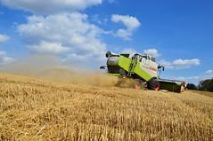 DSC_8322 (anetaležáková) Tags: summer sunset summerharvest sunnydays harvest agriculture agriphoto czechagri caseihpuma case casepuma165 caseoptum casepuma200 claas claaslexion newholland