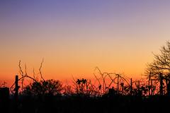 sfumature (Montello 2016) Tags: rosso viola contrasto tramonti