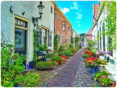 In bloom @ Elburg #elburg #streetphotography #straatfotografie #streetshot #flowers #bloem #bloemen #street #history #historical #madeinholland #dutchculture #lovephotography #photographer #photography #fotograaf #fotografie #outside #travel (Chantal vander Reijden) Tags: flowers madeinholland historical streetphotography history bloemen streetshot lovephotography fotografie fotograaf elburg street outside bloem photographer straatfotografie travel dutchculture photography
