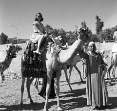To the Pyramids! (Michael Jefferies) Tags: africa egypt camel ride cairo giza pyramids 1964
