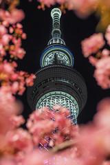Skytree|晴空塔 (里卡豆) Tags: sumidaku tōkyōto 日本 jp 臺灣省 台灣 tw 台灣省 olympus penf 45mm f12 pro olympus45mmf12pro