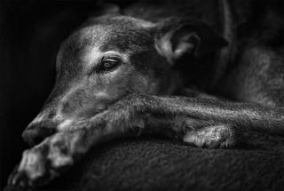 My greyhound, Jamie