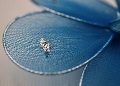 Petals (Helen Orozco) Tags: macromondays mesh hmm net petal