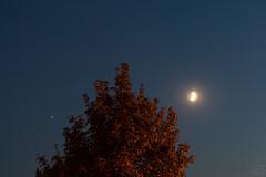 Jupiter & Moon / @ 55 mm / 2018-08-16 (astrofreak81) Tags: jupiter moon luna mond planet stars tree light night sky dark konjunktion konstellation dresden 20180816