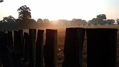 Sun Up. (Worcestershire UK) Tags: fence sunup daybreak thegoldenhour sunshine sunrise sun hanbury