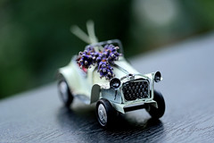 LIfe's too short to drive boring cars (eleni m) Tags: car toy toycar macro lavender tabletop blik tin series flower plant wheels dof speelgoed