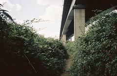 Footpath along the M5 (knautia) Tags: underthem5 lamplightersmarsh avonmouth bristol england uk august 2018 ishootfilm olympus xa2 olympusxa2 nxa2roll54 heatwave m5 motorway motorwaybridge naturereserve brambles footpath 160iso kodak portra