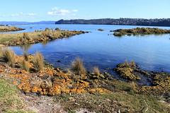 IMG_9035 (christineNZ2017) Tags: ambury regional park amburypark birdsanctuary birdlife bird sanctuary southauckland auckland newzealand winter
