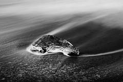 Ephemeral (Longleaf.Photography) Tags: erosion ice jokulsarlon glacier iceberg beach black bw waves coast iceland