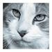 The Selenium Cat