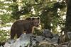 _W1G9017 (Outlander Photo) Tags: kozarišče cerknica slovenia si