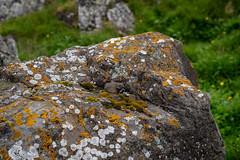 18C_5657.jpg (Jim Martellotti) Tags: iceland lichen rock orange white