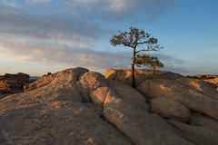 That tree (Squirrel Girl cbk) Tags: 2018 elmalpaisnationalmonument may goldenhour sunset grants newmexico unitedstates us