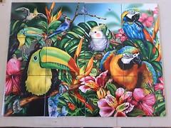 Birds of a feather 2 tile mural on 15.2cm tiles at £192  www.tilemuralstore.co.uk  #tilemurals #kitchentiles #tropicalrainforest #parrots #tropicalbirds #macaw (tilemuralstoreuk) Tags: kitchentiles tilemurals tropicalrainforest parrots macaw tropicalbirds