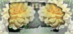 FELIZ JUEVES DE FLORES (Angelines3) Tags: rosas amarilla amistad arreglofotográfico
