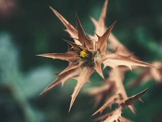 2018:08:12 14:50:16 - Garden Flower Bokeh - Tarbek - Schleswig-Holstein - Deutschland Olympus E-520