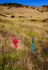 Ready for anything (CAJC: in the Rockies) Tags: firehydrant bouldercountyfoothillscolorado joderranchtrailboulderco boulderco preparedness fires heat summer dogwalkspecials bouldercountyco colorado