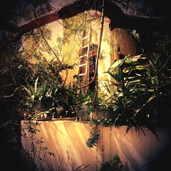 < The ladder will get us on the roof where it's peaceful as can be > (Wandering Dom) Tags: urban house architecture geometry ladder walls roof peaceful usa southerncalifornia earth multiverse being nothingness humans habitat reality dream roam wandering tree plants nature cultivation