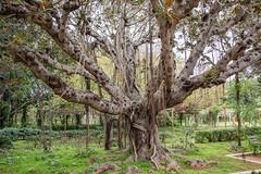 _DSC4909 (BasiaBM) Tags: morocco rabat botanical garden