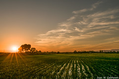 Atardecer sobre el maíz...(Sunset over the cornfield). (Juan M. Galiñanes) Tags: puestadesol solpor solsticio summersolstice brillosolar sol casetas campo maíz sonnenuntergang sunset zaragoza atardecer