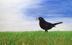 Early flight (daddypapersurfer@btinternet.com) Tags: blackbird worms caterpillar grass acrylic feedingthefamily optimisticoutlook cheeryviewoftheworld early bird