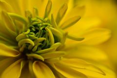 My favorite yellow... (jrmcmellen) Tags: