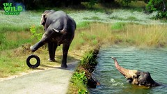 A Giant Elephant Saved By Kind People from the Canal (THE WILD ELEPHANT) Tags: huge elephant rescue video youtube quite baby funny kids videos the wild wildlife news tv