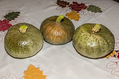 Three Kabocha Squashes!!! (SCSQ4) Tags: kabocha garden harvests squash homegrown food