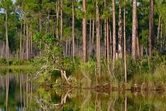 Long Pine Key (bmasdeu) Tags: pinelands everglades nationalpark pines pond island reflections tranquil longpinekey florida