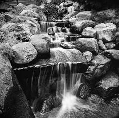 Sunken Gardens Waterfall (jim.kinkennon) Tags: blackwhite hasselblad panf